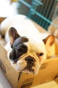 Pet relocation - Hire experts for a proper move!
