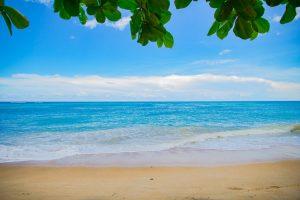 Seashore and beach