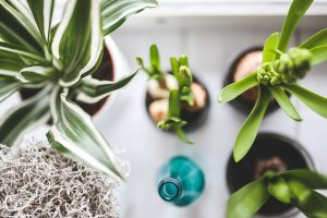 Plants on the desk