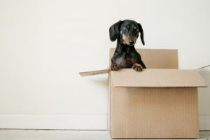 A dog in a box.