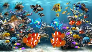 An aquarium with different fish types.