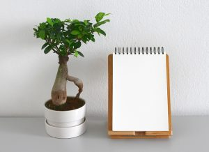 a plant and a notebook to plan how to move houseplants internationally