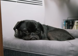 a black dog laying in a grey bed.