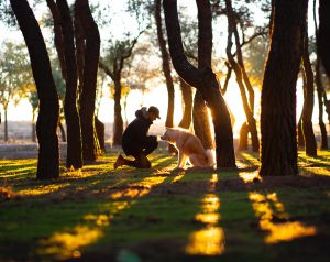 a man in a park with a dog among the trees