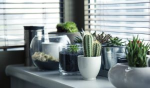Potted cacti in the window. Plants can make your new place feel like home.