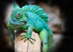 Exotic pet reptile
