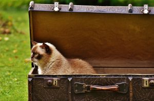 The best way to help your pets cope with moving day is to gradually expose them to it!