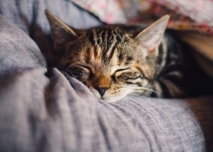 Help you companion relax by finding a safe place he can retreat to when the move starts.