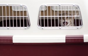 Help your pet adjust to a new environment by choosing the suitable carrier