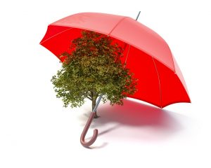 A tree protected by umbrella