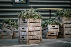 Boxes with plants