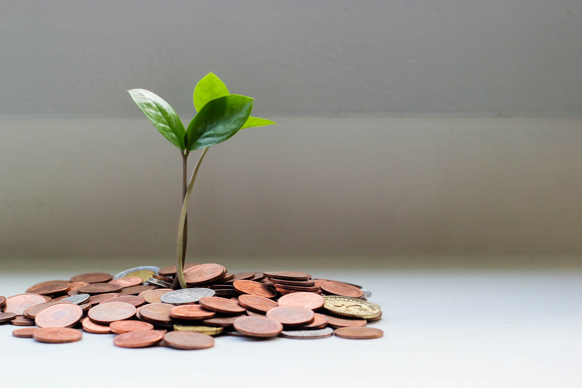 A plant grown from pile of coins that symbolize the savings you will have when trim shipping costs