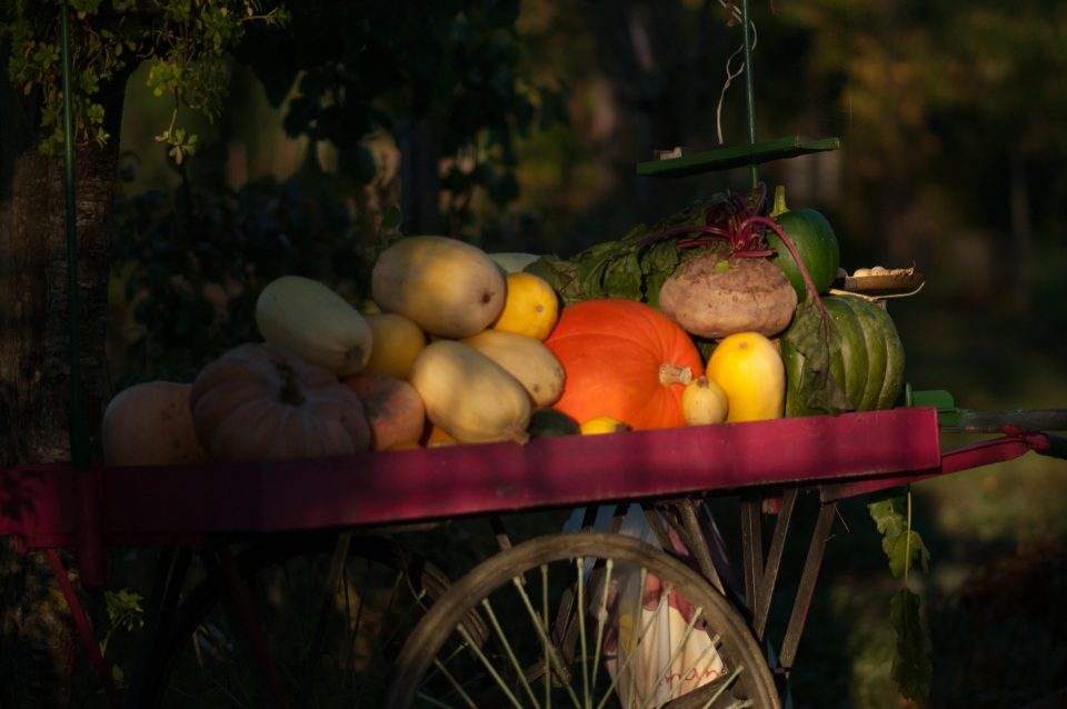 A pile of fruits and vegetables that show why is hard to ship fruits and vegetables