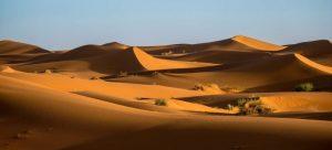 Green bishes on desert